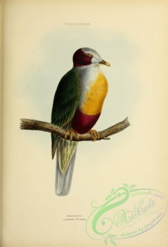 pigeons-00805 - Yellow-breasted Fruit Dove