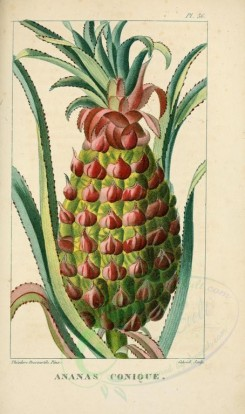 pineapple-00009 - ananas, Pine-apple [2119x3581]