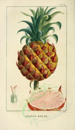 pineapple-00014 - Ananas, Pine-apple [2109x3638]