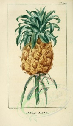 pineapple-00015 - Ananas, Pine-apple, 2 [2109x3638]