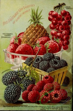 pineapple-00025 - 024-Ananas, Pineapple, Strawberry, Currant, Raspberry, Blackberry, in basket, in box, plate, vase