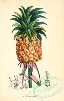 pineapple-00031 - Ananas