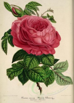 pink_flowers-00994 - Rose Marie Thierry [4150x5796]