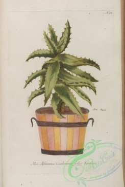 potted_plants-00008 - 050-aloe africana