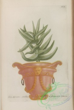 potted_plants-00015 - 061-aloe africana