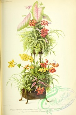 potted_plants-00105 - Calceolaria