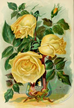 potted_plants-00139 - Rose
