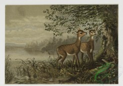prang_cards_animals-00011 - 0082-Christmas cards depicting deer, ducks and ducklings 107870