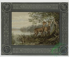 prang_cards_animals-00012 - 0082-Christmas cards depicting deer, ducks and ducklings 107873