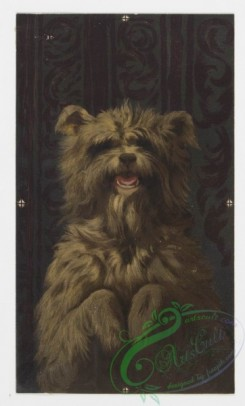 prang_cards_animals-00023 - 0145-Christmas cards depicting animals-owls, bears, cats, and dogs 101927