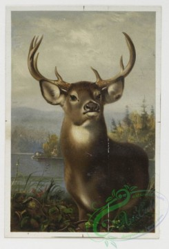 prang_cards_animals-00029 - 0181-Christmas, New Year, and Easter cards depicting flowers, butterflies, birds, deer 103860