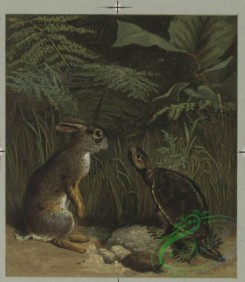 prang_cards_animals-00064 - 0477-Christmas cards depicting cats reading, bears dancing, owls singing, tortoise, and hare 106104