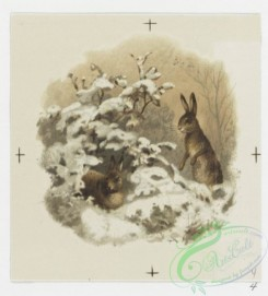 prang_cards_animals-00090 - 0653-Calendar for 1888 depicting flowers, cards depicting snowy winter scenes, Easter cards depicting flowers 107128
