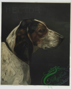 prang_cards_animals-00099 - 0656-(A print with the word 'Hector' and depicting a portrait of a hunting dog.) 107147