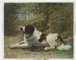 prang_cards_animals-00153 - 1102-A print entitled 'Kay,' depicting a Saint Bernard laying in the forest 100363