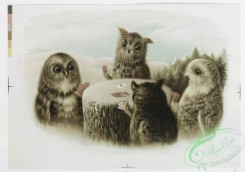 prang_cards_animals-00155 - 1108-Prints entitled 'tiddledy-winks' and 'whilst,' depicting cats playing tiddledywinks and owls playing cards on a tree stump in the snow 100378
