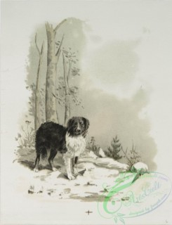 prang_cards_animals-00184 - 1224-A Calendar depicting dogs-laying on a pillow, in the forest, howling at the moon and drinking water 100909