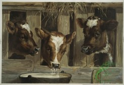 prang_cards_animals-00191 - 1231-Three of a kine (calves in a barn drinking from a bucket) 100949