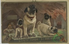 prang_cards_animals-00225 - 1592-Trade cards depicting dogs, cats, fires, and cameras 102522