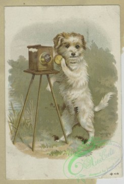 prang_cards_animals-00227 - 1592-Trade cards depicting dogs, cats, fires, and cameras 102524