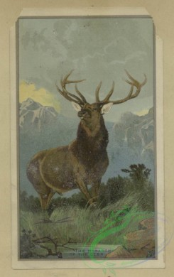 prang_cards_animals-00243 - 1655-Cards depicting a buck and a boy reading outdoors on a scenic overlook 102866