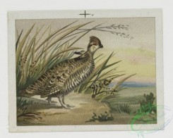 prang_cards_birds-00006 - 0077-Christmas cards depicting animals and birds 107664