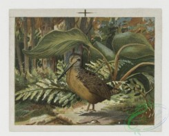 prang_cards_birds-00010 - 0077-Christmas cards depicting animals and birds 107668