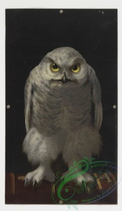 prang_cards_birds-00022 - 0145-Christmas cards depicting animals-owls, bears, cats, and dogs 101925