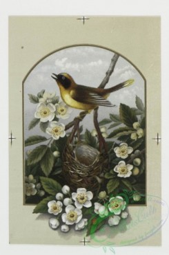 prang_cards_birds-00024 - 0175-Birthday, Christmas, and New Year cards depicting birds, nests and flowering trees 103526