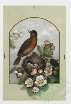 prang_cards_birds-00025 - 0175-Birthday, Christmas, and New Year cards depicting birds, nests and flowering trees 103527
