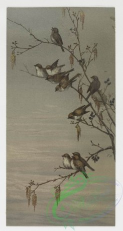 prang_cards_birds-00040 - 0210-Birthday cards depicting birds perched on tree branches 104060