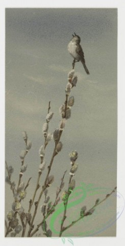 prang_cards_birds-00044 - 0210-Birthday cards depicting birds perched on tree branches 104064