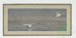 prang_cards_birds-00056 - 0224-Christmas and New Year cards depicting birds and ocean scenes 104141