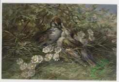 prang_cards_birds-00076 - 0260-Birthday, Christmas, and Valentine cards depicting birds, flowers, and plants 104397