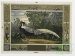 prang_cards_birds-00092 - 0300-Cards with decorative borders, depicting pheasants in the snow and by a lake 104774