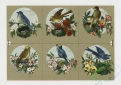 prang_cards_birds-00108 - 0328-Small prints depicting flowers and birds 105085