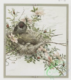 prang_cards_birds-00113 - 0363-Easter and text cards depicting girls, nests, birds, stars and flowers 105297