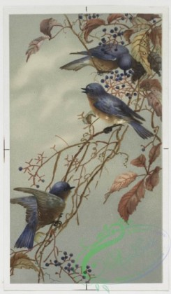prang_cards_birds-00126 - 0404-Easter cards depicting birds, flowers, eggs and the moon 105567