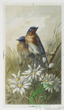 prang_cards_birds-00127 - 0404-Easter cards depicting birds, flowers, eggs and the moon 105568