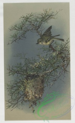 prang_cards_birds-00130 - 0419-Easter cards depicting birds and butterflies on tree branches 105682