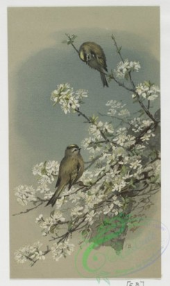 prang_cards_birds-00131 - 0419-Easter cards depicting birds and butterflies on tree branches 105683
