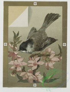 prang_cards_birds-00135 - 0434-Christmas, New Year, and birthday cards depicting flowers and birds 105795