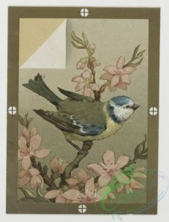 prang_cards_birds-00136 - 0434-Christmas, New Year, and birthday cards depicting flowers and birds 105796