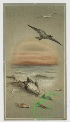 prang_cards_birds-00139 - 0446-Birthday, Christmas, Easter and New Year cards depicting winter, beach and spring landscapes, as well as birds, shells, flowers, trees and butterflies 105879