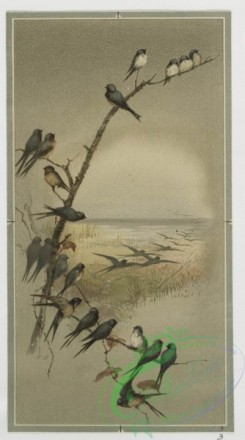 prang_cards_birds-00140 - 0446-Birthday, Christmas, Easter and New Year cards depicting winter, beach and spring landscapes, as well as birds, shells, flowers, trees and butterflies 105880