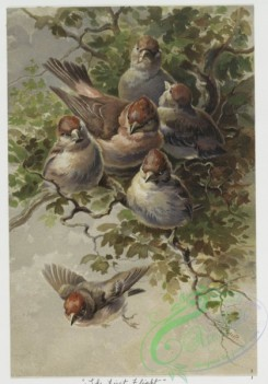 prang_cards_birds-00142 - 0448-Christmas cards depicting birds, entitled ''The First Flight'', ''The Farewell'', ''The Visit'' and ''The Surprise'' 105892