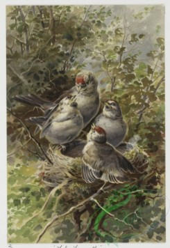 prang_cards_birds-00143 - 0448-Christmas cards depicting birds, entitled ''The First Flight'', ''The Farewell'', ''The Visit'' and ''The Surprise'' 105893
