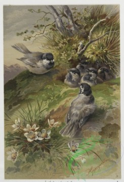 prang_cards_birds-00144 - 0448-Christmas cards depicting birds, entitled ''The First Flight'', ''The Farewell'', ''The Visit'' and ''The Surprise'' 105894