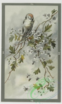 prang_cards_birds-00147 - 0453-Christmas cards depicting birds and flowers, with poetry 105941