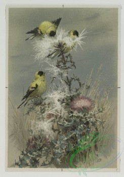 prang_cards_birds-00159 - 0517-Christmas cards depicting birds on tree branches 106377